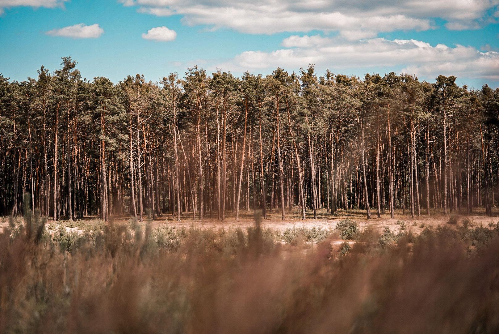 Organizácie trnavskej župy získali eurofondy na zelené projekty