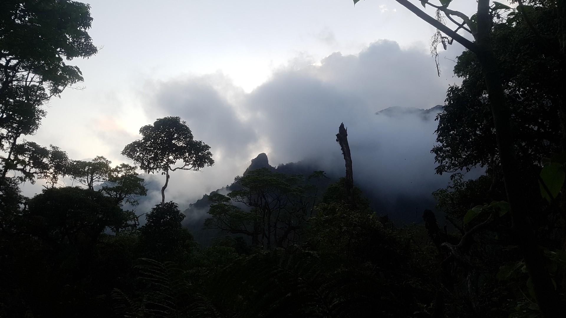Photo 6 BIOKO_Rainforest_1_Photo_JUSTIN_JAY