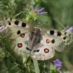 motyle-slovenska
