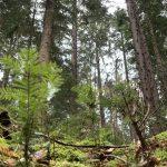 Mestske lesy Banska Bystrica