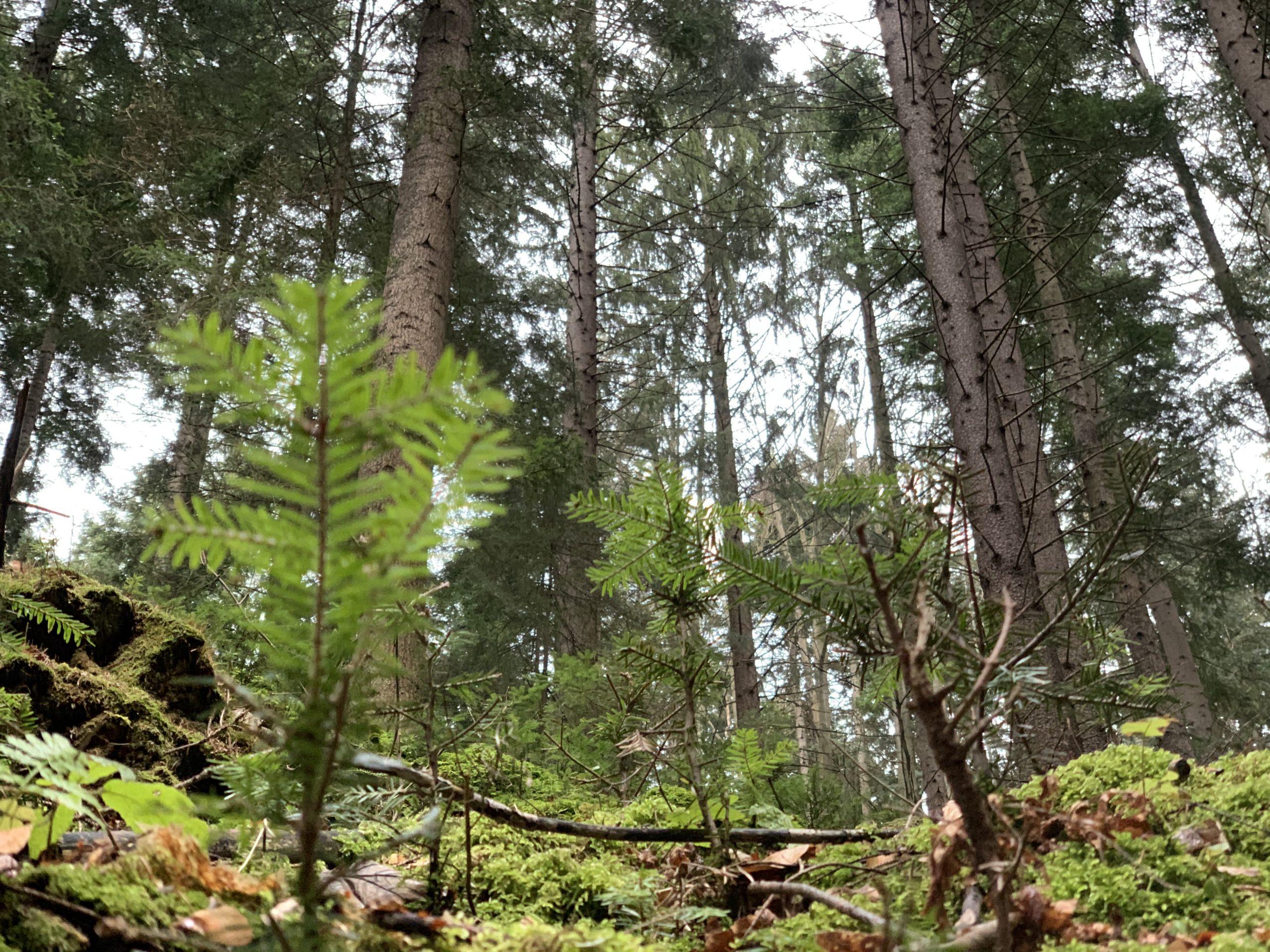 Banská Bystrica patrí k najzelenším krajským mestám aj vďaka mestským lesom